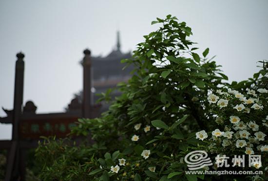 望宸阁上 指点江山 ,林水局带你领略杭州的山山水水