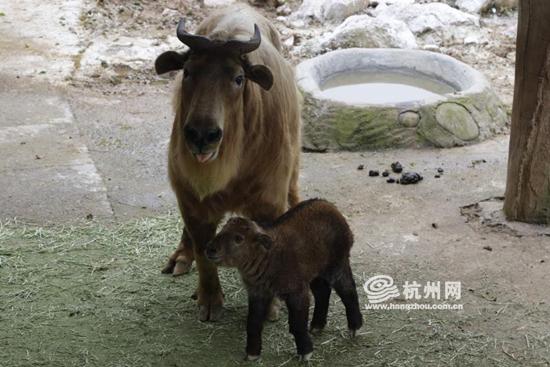身价堪比大熊猫 杭州野生动物世界新生代小国宝与游客
