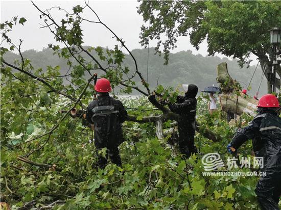 截至18点,杭州西湖风景名胜区抗台...