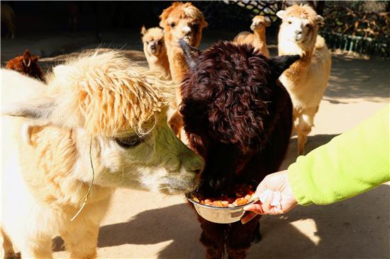 腊八节至 可爱的小动物们也吃上定制腊八粥(组图)