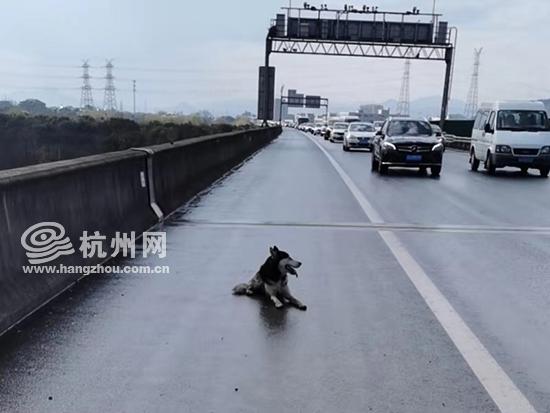 """因为一只狗,高速堵成""""狗""""!"""
