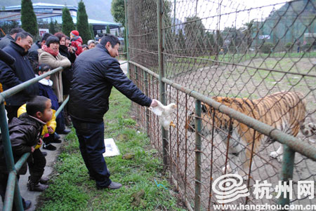 """""""在温岭动物园的猫科动物"""