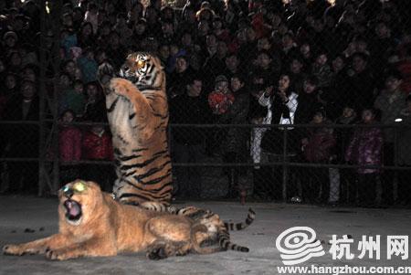 昨天是年初三,温岭动物园的游客量比往日激增了近百倍,其中有不少