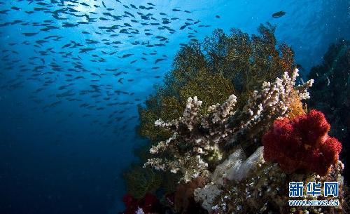 海底世界 地球 印度尼西亚/印尼四王岛海底世界