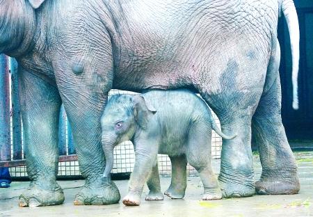 """杭网原创 原创新闻  杭州动物园迎来了""""生娃季"""",金丝猴,长臂猿喜报频"""