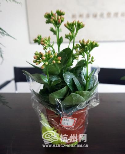 元宵和汤圆一样吗_旧书换绿植、领养桂花树 植树节的步伐近了 - 杭网原创 - 杭州网