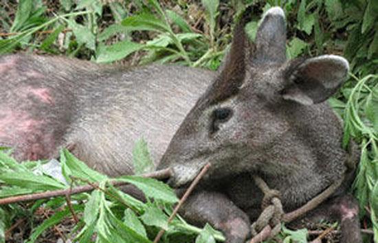 临安村民救起一只国家二类保护动物毛冠鹿