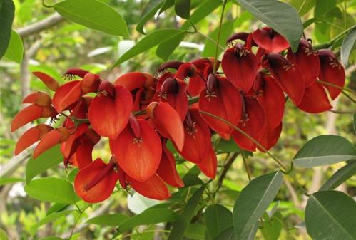 观赏植物 灌木果实
