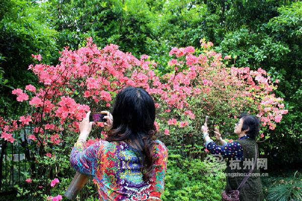 4月23日,杭州植物园,杜鹃花盛开,前来赏花拍照的市民游客络绎不绝.