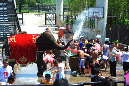 野生动物园大象清凉总动员-杭网原创-杭州